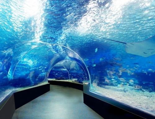 Създадена е специализирана лаборатория за изследване на морски и сладководни аквакултури