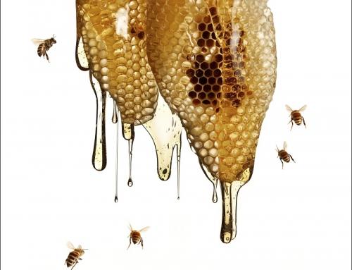 Пчелари ще усвоят над 14 млн. лева по Националната програма следващите 3 години
