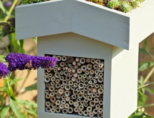 ДФЗ ще кредитира одобрени проекти по пчеларската програма