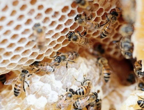 Започва приемът по пчеларската мярка Е