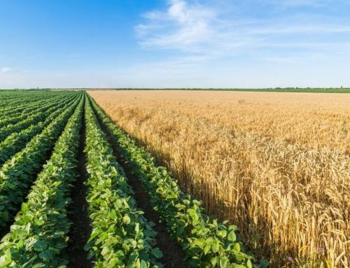 """Отворена е процедурата по подмярка 4.1.2. """"Инвестиции в земеделски стопанства по Тематична подпрограма за развитие на малки стопанства"""" от ПРСР 2014-2020г."""