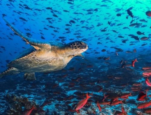 """Процедура """"Повишаване на знанията за състоянието на морската среда"""""""
