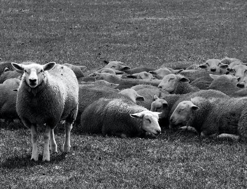 """Процедура """"Целеви прием за земеделски стопани в сектор Животновъдство"""""""